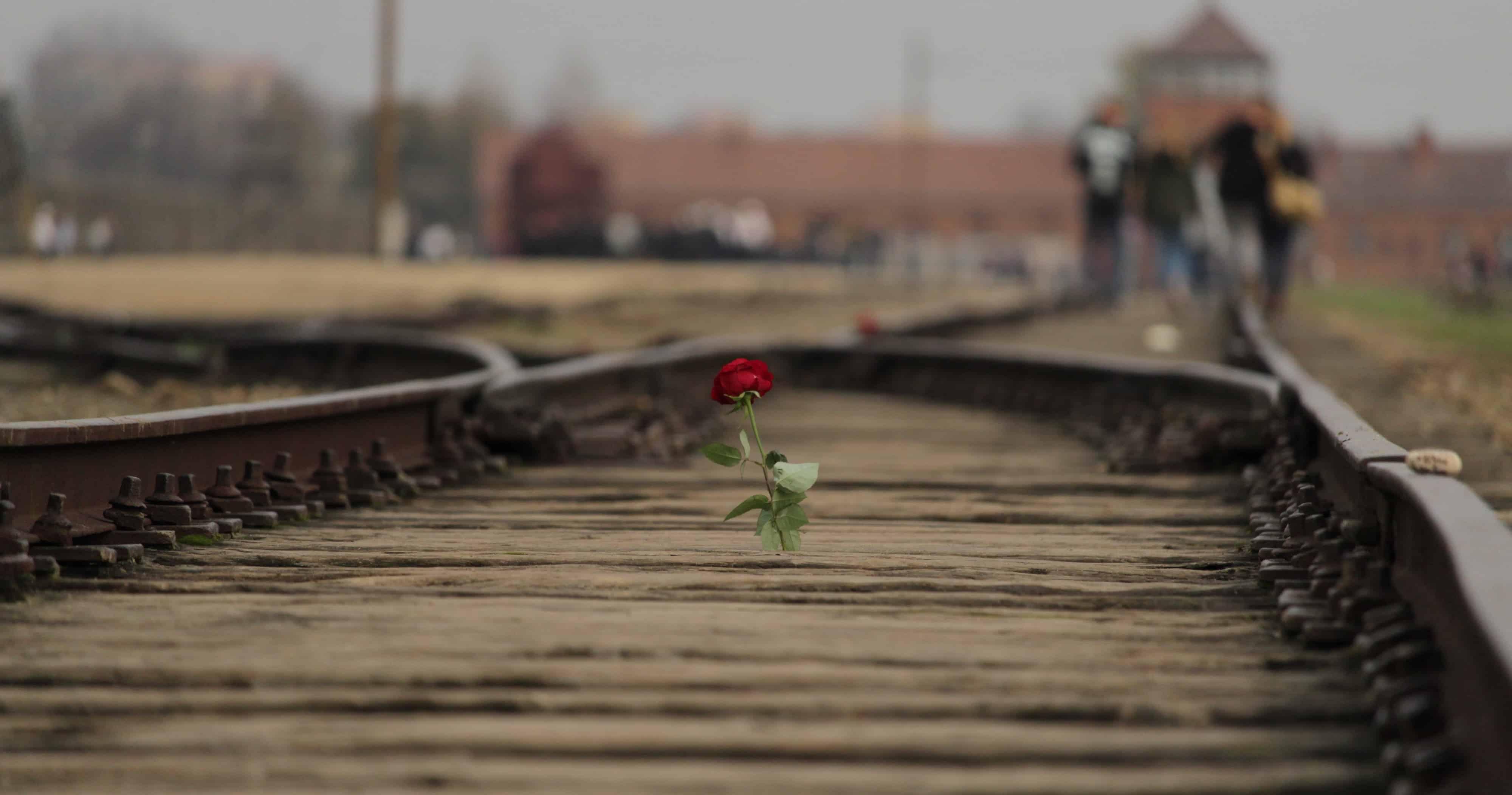 Giorno della Memoria, la lezione del passato in dieci libri