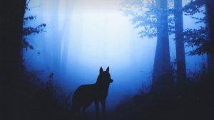 La pelle del lupo